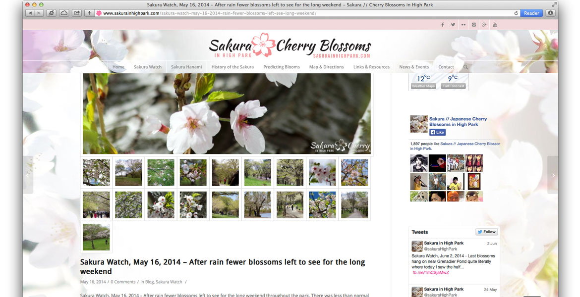 SakuraInHighPark.com Responsive Website: page with gallery